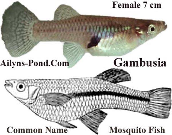 Cardillowiki Ecosystems